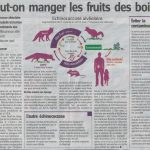Danger des taupes et rat-taupier